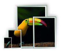 Coala posterframe met aluminium kliklijsten in diverse formaten met posters